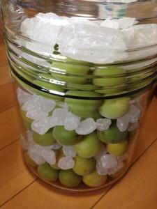 梅と氷砂糖を交互に詰めてみた写真