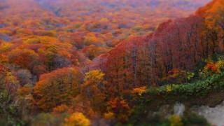 十和田湖で見れる紅葉no.1